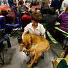 圣彼得堡举行大型宠物展览会