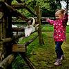 女孩与山羊