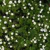 闲花野草也静美 绕行远观留得芳草绿