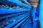 据中国媒体报道,该国目前已发现60多例H7N9型禽流感病例,其中13人已经死亡。图片来源:路透社