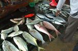 俄罗斯将对出口渔业资源实行产地证书制度以确认其合法性。图片来源:Flickr / Dhammika Heenpella