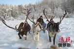 图片来源:severolen.ru