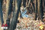 图片来源:Vasily Solkin / WWF-Russia