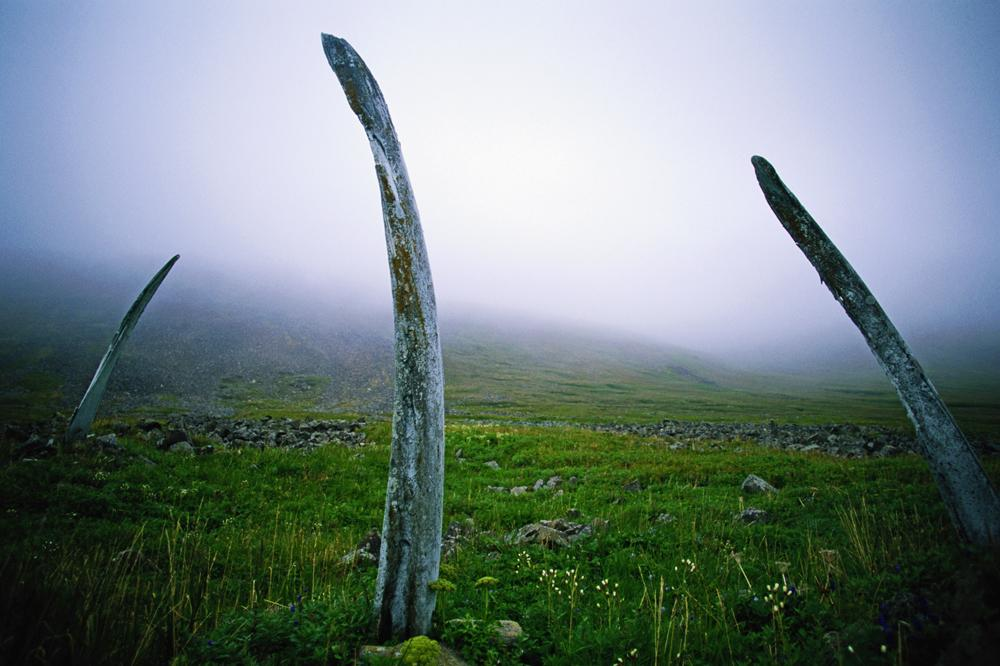 WHALE ALLEY. A unique monument of ancient Eskimo origin on Yttygrane Island located in the Strait of Senyavin off the south-eastern tip of Chukotka. The structure is formed of two rows of enormous bones of bowhead whales, dug in by the shore. The dimensions of the alley, which runs 500 m along the northern coast of the island, and its complex structure, are truly amazing.