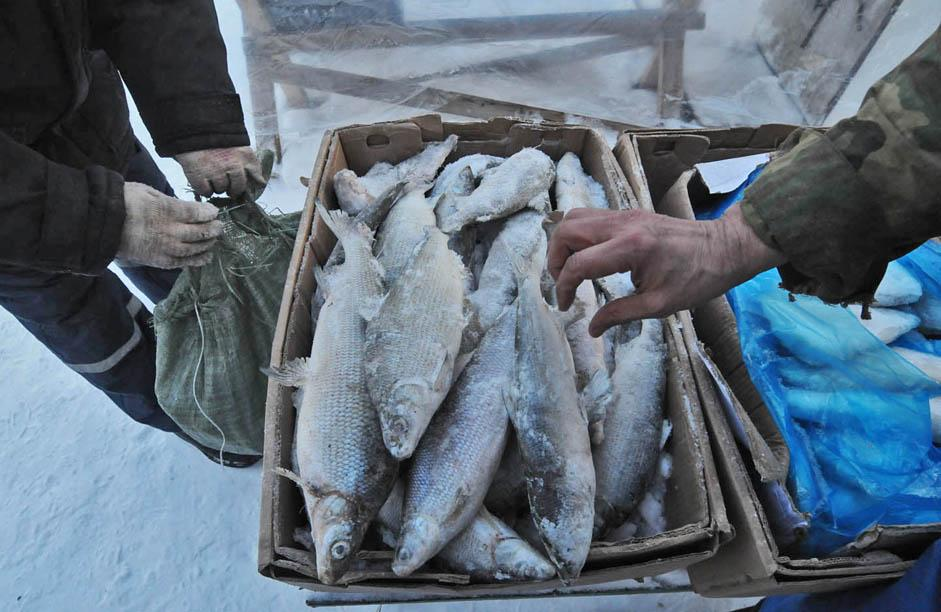 The addition of fur revenue to the treasury expanded trade with foreign countries. By the early 20th century, up to 200,000 metric tons of fish and approximately 50,000 furs (fox, squirrel, ermine, etc.) were exported abroad every year.