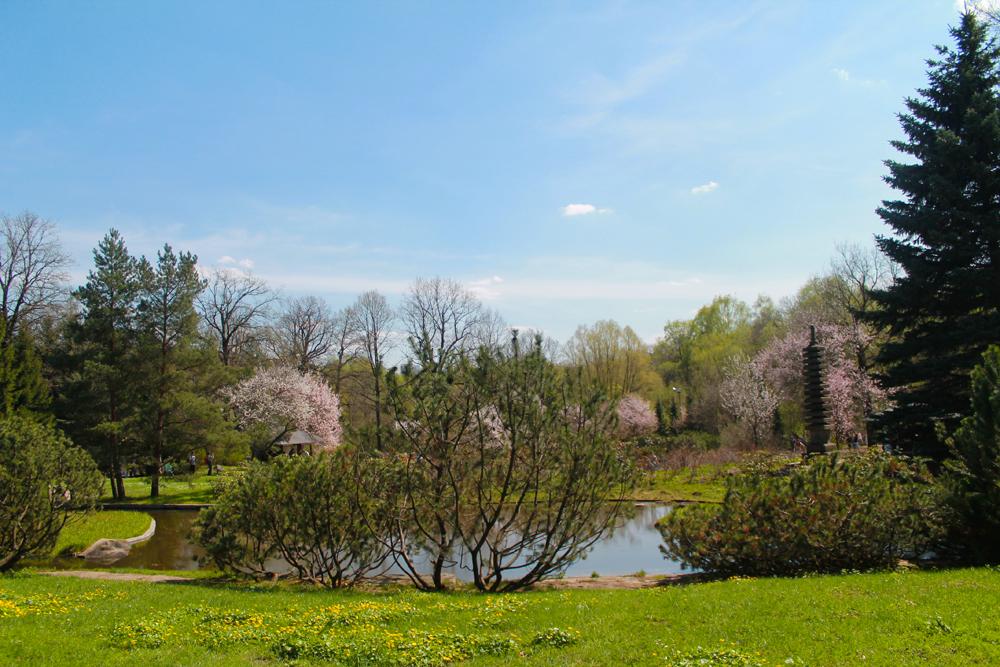 Le Jardin compte environ 250 arbres issus de l'île d'Hokkaido.