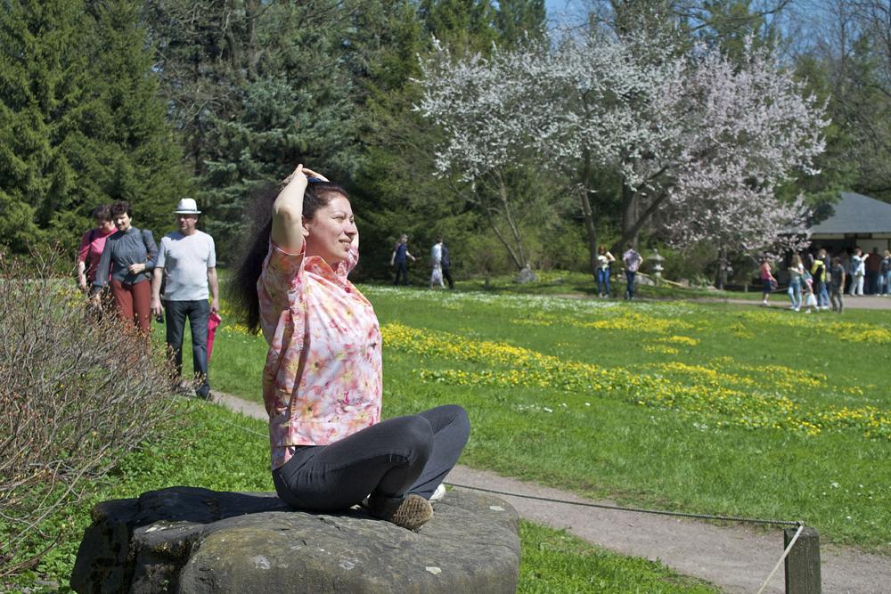 Le Jardin japonais du Jardin botanique de l'Académie des sciences de Russie a été ouvert au public en 1987, c'est à l'occasion de cet évènement que cette plante a été importée du Japon. Le premier arbre a été planté par le Ministre des affaires étrangères du Japon Shintaro Abe. Le plan du Jardin a été réalisé par le paysagiste Ken Nakajima et l'architecte Takeo Adati.
