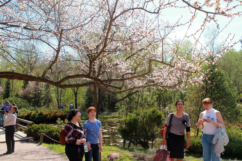 En général, il faut attendre environ cinq ans après la plantation pour que les arbustes prennent de la vigueur et se couvrent entièrement de fleurs au moment de la floraison.