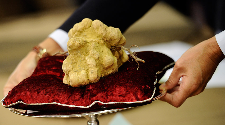 "Russian billionaire Vladimir Potanin bought a 4 pound, $95,000 white truffle from NYC restaurateur Nello Balan at the very beginning of this autumn's truffle season. Potanin, who has an estimated net worth of around $14.3 billion according to Forbes Russia, owns 30.4 per cent of Norilsk Nickel, the world's largest producer of the commodity. His latest purchase - the so-called White Alba truffle, found only in several regions of Italy,--is one of the most expensive types of truffles in the world and is often referred to as ""white gold."""