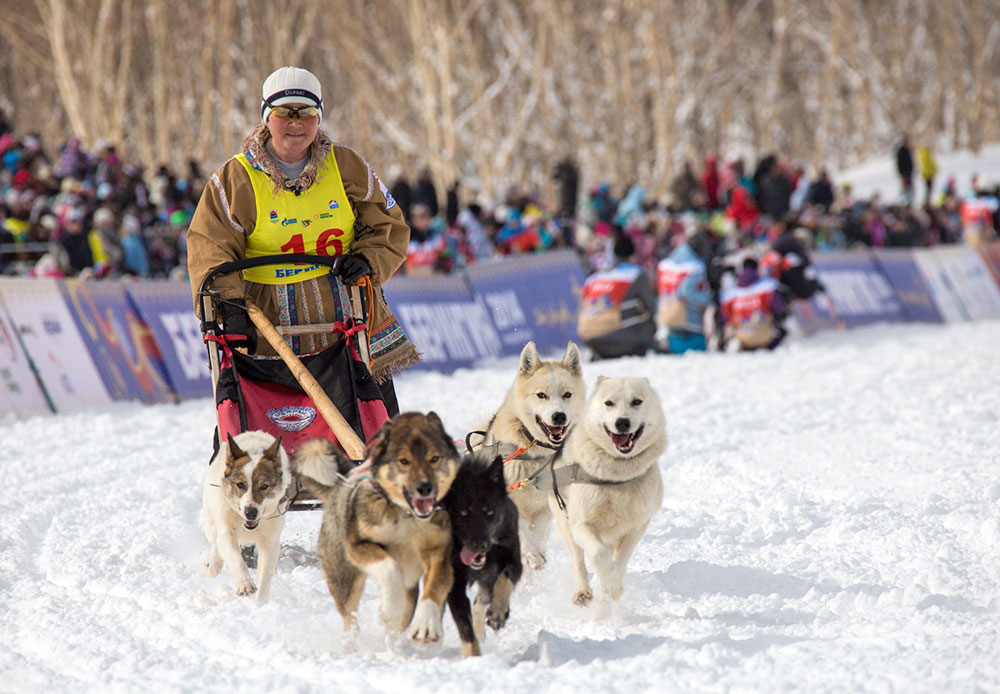 The Kamchatka Peninsula traditionally hosts the longest sled dog race in Eurasia. This competition of strength, courage, and endurance features 15 mushers (who drive dogs harnessed to long, narrow sleds). Among them are three brave women. They, like the men, have to overcome 1,300 km from the city of Petropavlovsk-Kamchatsky to the village of Tilichiki in the Olyutorsky region. The race began on March 3 and is still in progress — the participants have 357 km left to cover.