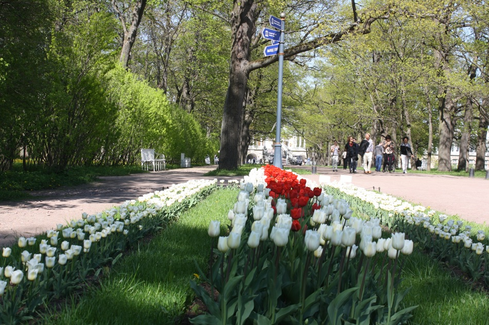Tulips occupy the pride of place in the gardens.