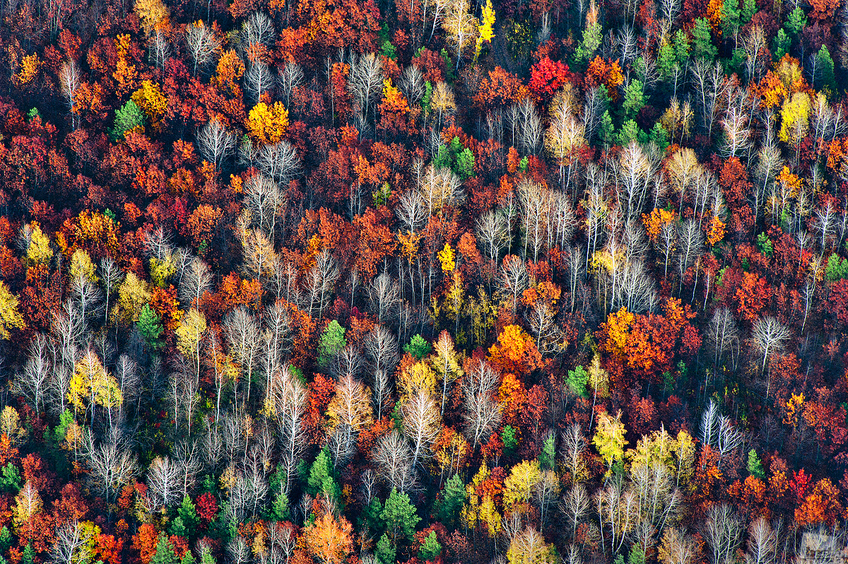 A forest in autumn, from an altitude of 1000 meters, Voronezh region