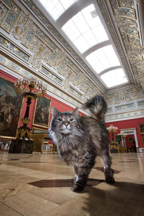 Tikhon, the Large Italian Skylight Hall. Named after the pagan god of fate, old-timer Tikhon is extremely discreet and thorough. As fate itself would have it, Tikhon was moved from the General Staff building to the Great Hermitage, where he became the unofficial leader of all the palace cats.