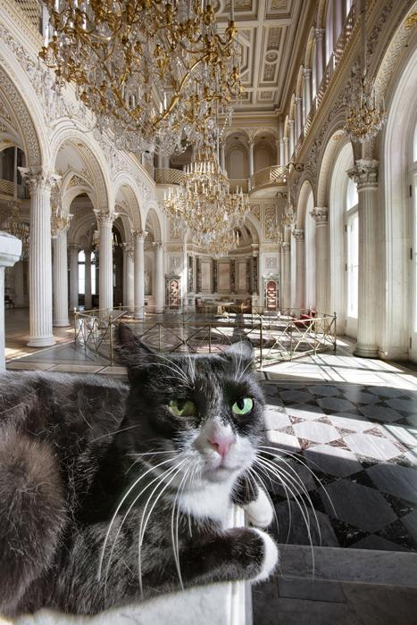 Pingva, the Pavilion Hall. An elderly cat robed in austere black-and-white, descended from palace stock. This cat was born to guard the Hermitage. The modest, sombre black-and-white livery is evidence of her aristocratic roots. She shuns feline company in favor of solitude, preferring to live apart from her fellows in the cattery.