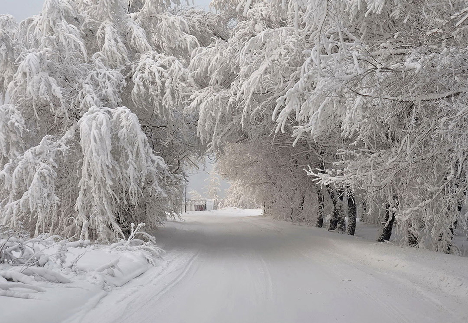 """""""Winter arch."""" Taken on the banks of the Yenisei in bitter cold. The trees here are resplendent in any weather."""
