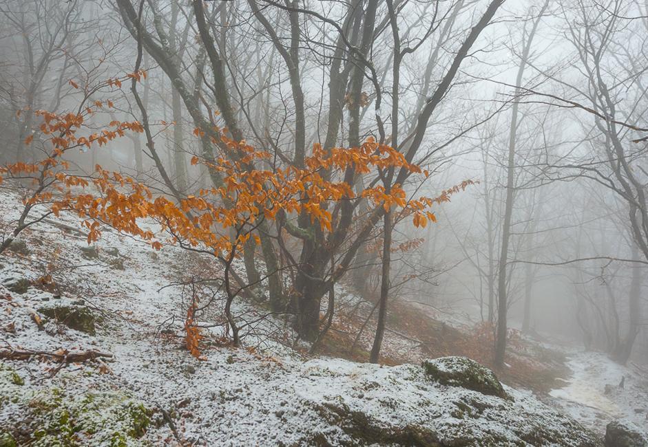 Mientras uno va bajando, la niebla se vuelve débil, tiene cada vez menos nieve, su clima va cambiando, incluso aparecen árboles con las hojas amarillas, que las conservaron desde el año pasado.