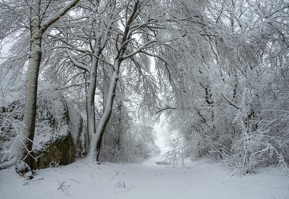En esta zona no nieva casi nunca, y por eso captar la naturaleza en este estado es una buena suerte.