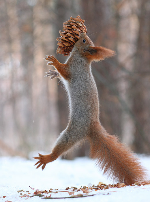 Finally, he gets to nibble a typical squirrel food.