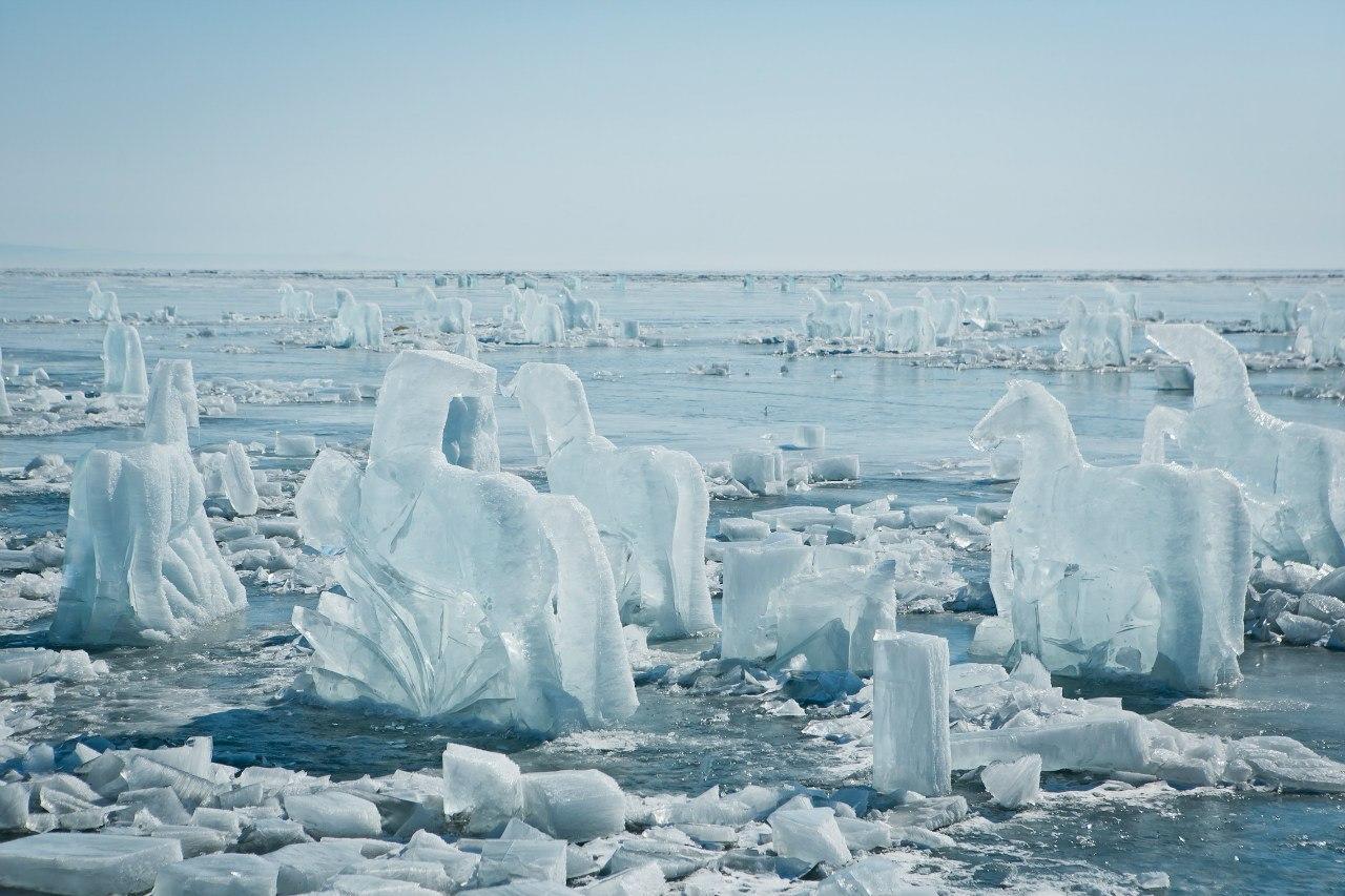 Per tre settimane, scultori provenienti da Irkutsk, dalla Buryatia, dalla Yakutia e da Perm hanno lavorato il ghiaccio creando oltre trecento graziosi cavalli, tutti diversi, ognuno pesante una tonnellata e mezzo