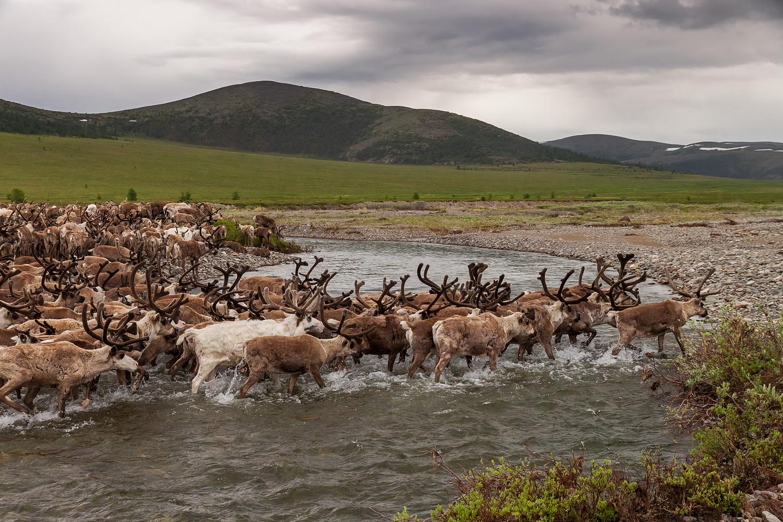 reindeers3