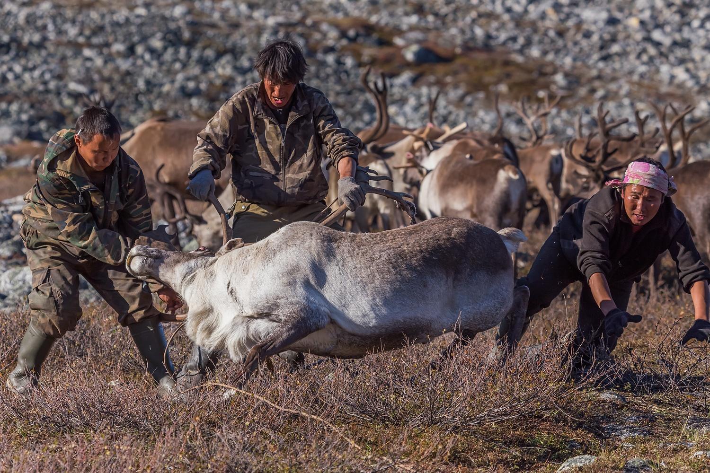 reindeers6