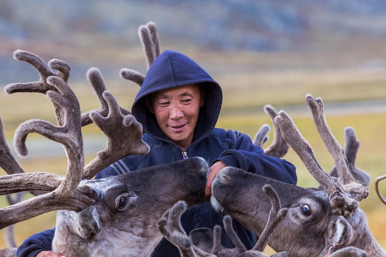 reindeers8