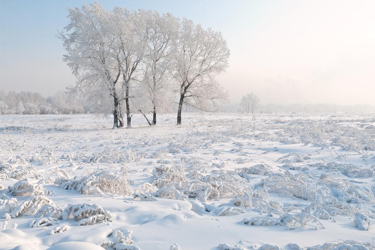 Altai nature