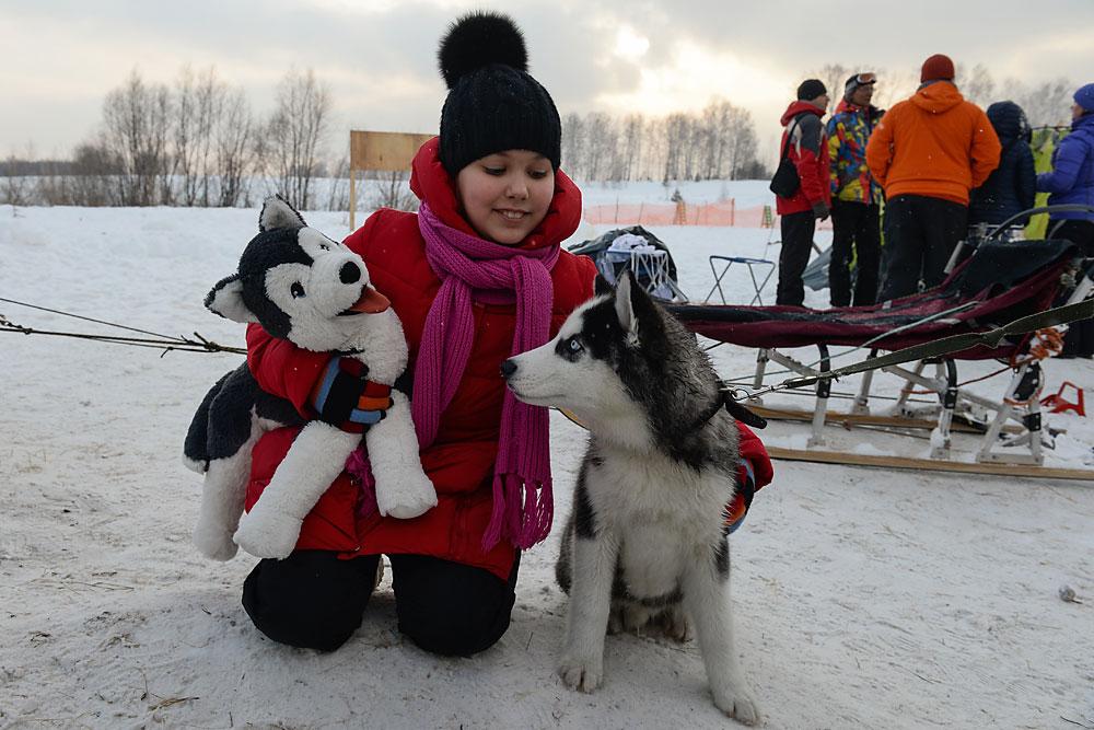 Husky Fest Sled Dog Festival