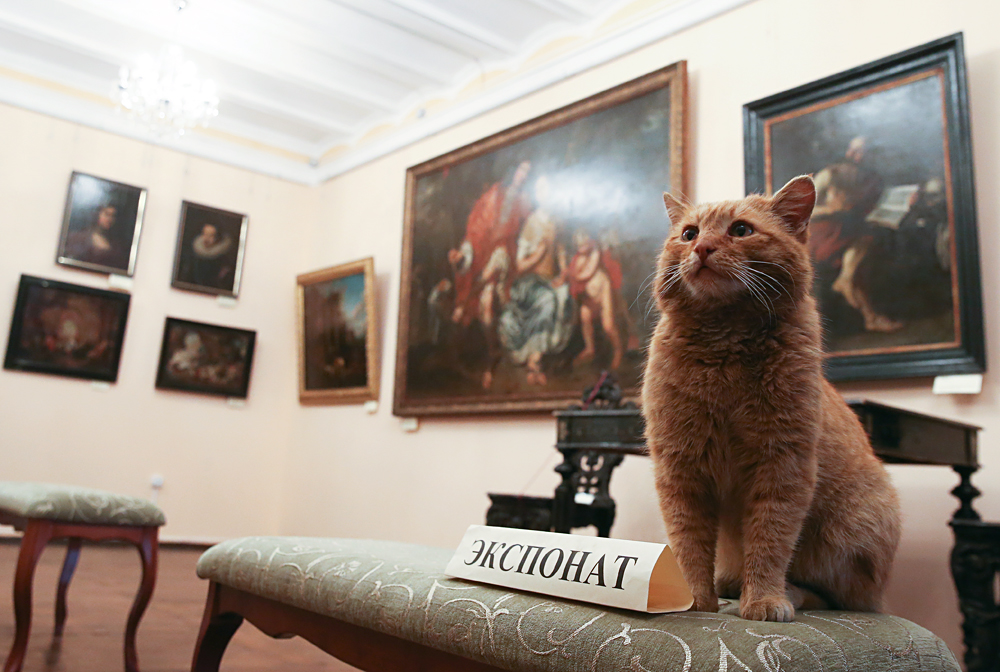 Marai the cat at Serpukhov's Museum of History and Art