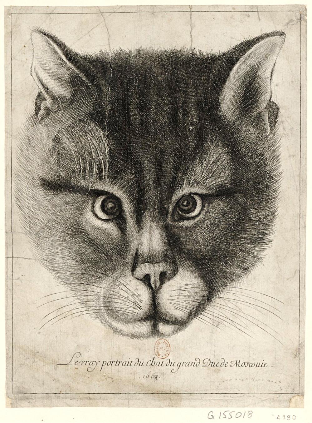 Václav Hollar cat