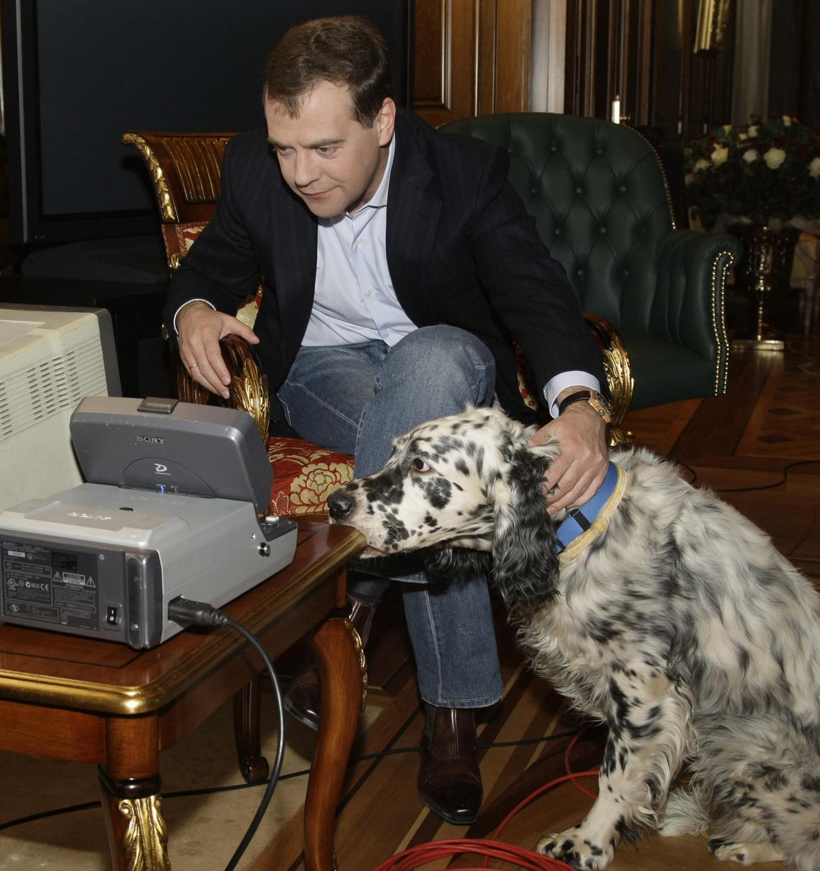 Medvedev dog