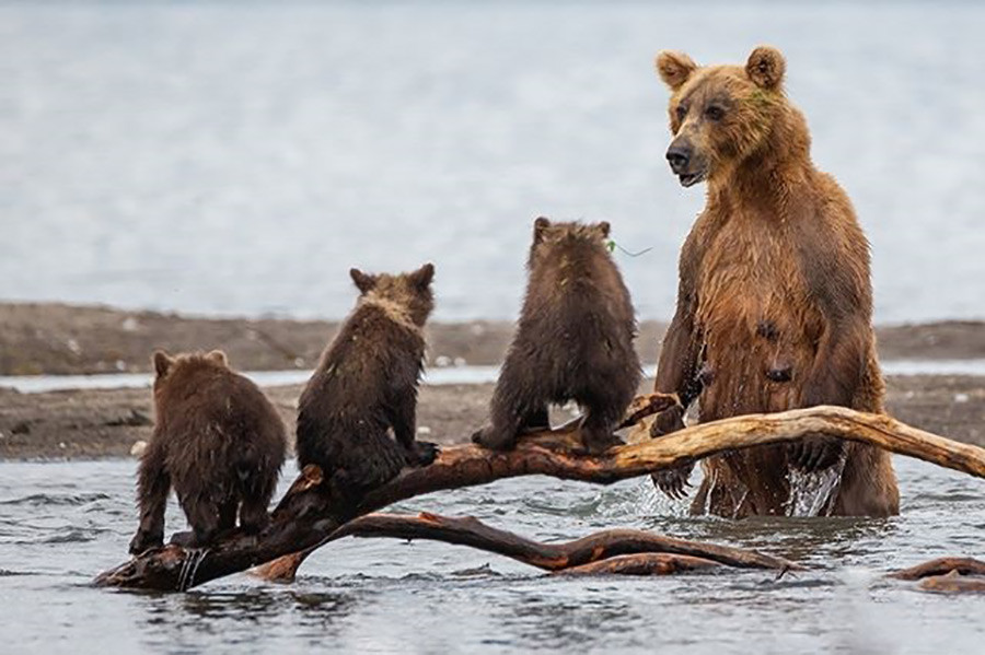 Kamchatka animals
