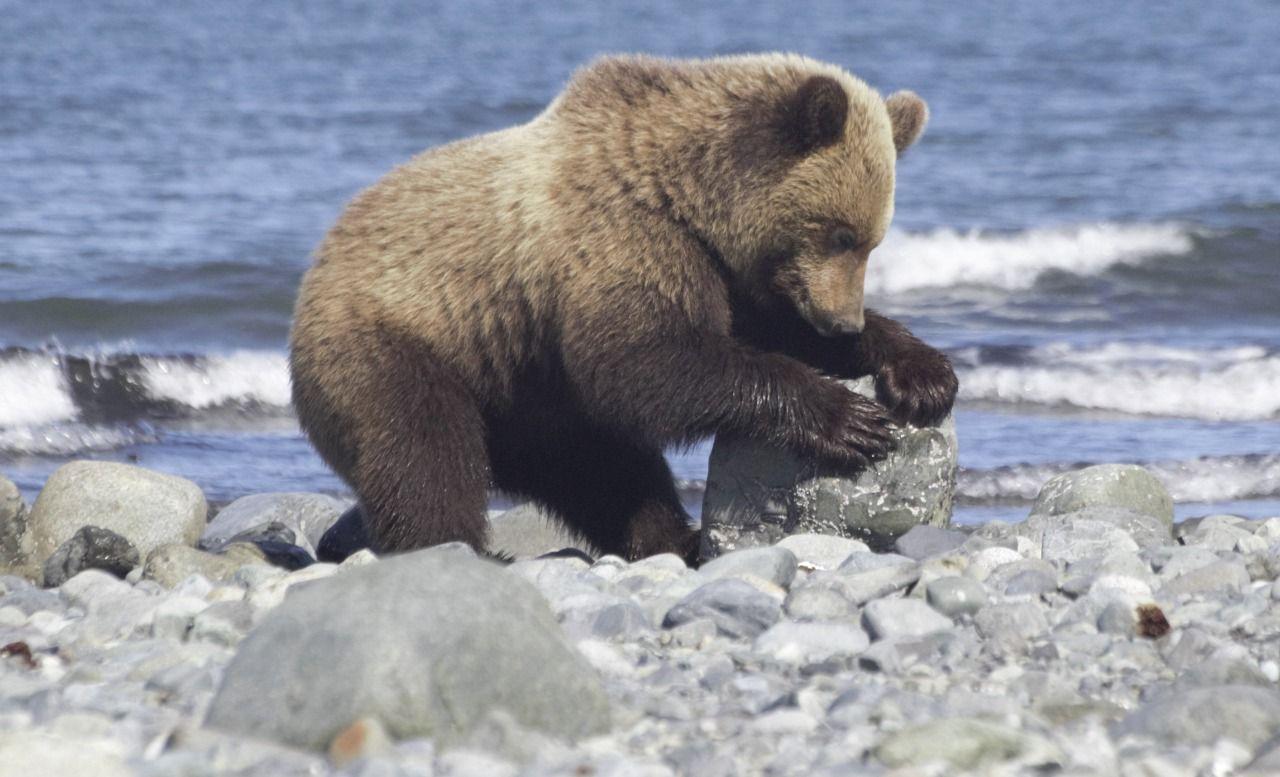 Magadansky Nature Reserve