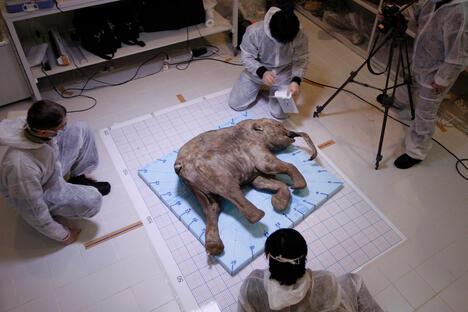 Khroma Mammoth