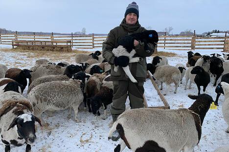 Andrey Maibakh raising sheep in Omsk region village