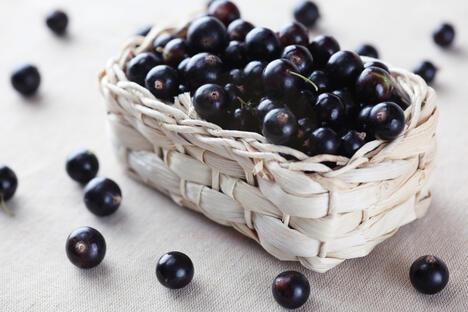 Blackcurrant recipes