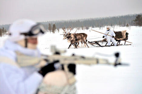 Arctic military animals
