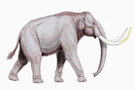 Mammuthus trogontherii