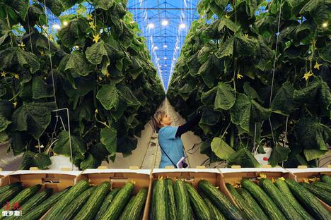 Farm in Lipetsk