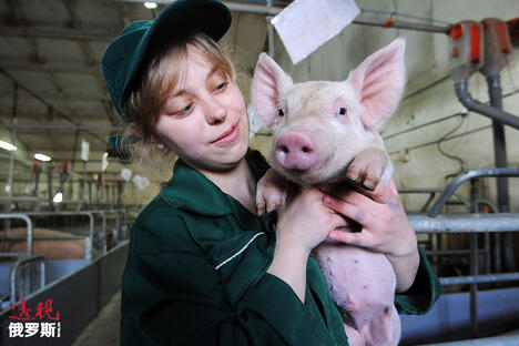 Rodnikovsky pig-breeding farm CN