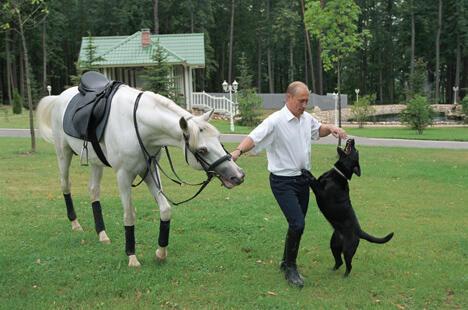 """在普京的众多宠物中,最受喜爱的当属由紧急情况部部长赠送的拉布拉多犬""""科尼""""。图片来源:塔斯社"""