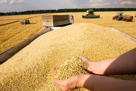 俄罗斯粮食出口力提高 积极开拓中国和东南亚市场。图片来源:塔斯社