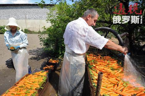 """俄罗斯可以禁止使用转基因技术,种植需要以传统方式种植的作物:""""我们拥有世界20%的耕地,不存在耕地不足的问题。""""图片来源:生意人报"""