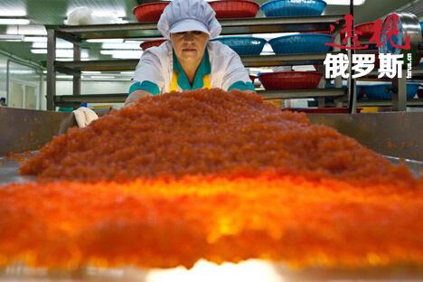 俄罗斯的野生鱼子酱,曾是俄罗斯沙皇和那些渴望高贵的富人们的心爱小吃,现在则不然。图片来源:AP