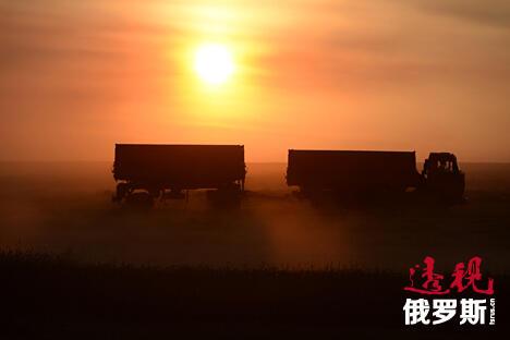 Grain harvesting CN