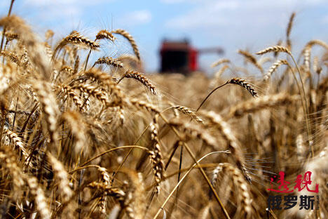 Russia starts grain export to China CN