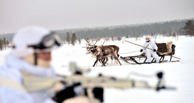 Arctic military animals