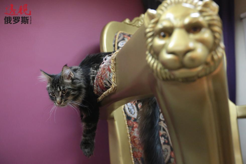 """""""猫咪共和国""""咖啡馆的一只猫。 图片来源:Igor Russak/俄新社"""