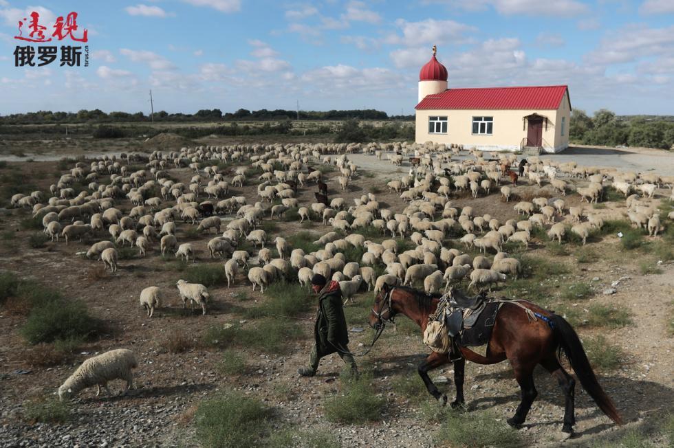 当放羊倌虽不太体面,但却是山地高原的主要职业。 图片来源:Vladimir Smirnov/塔斯社