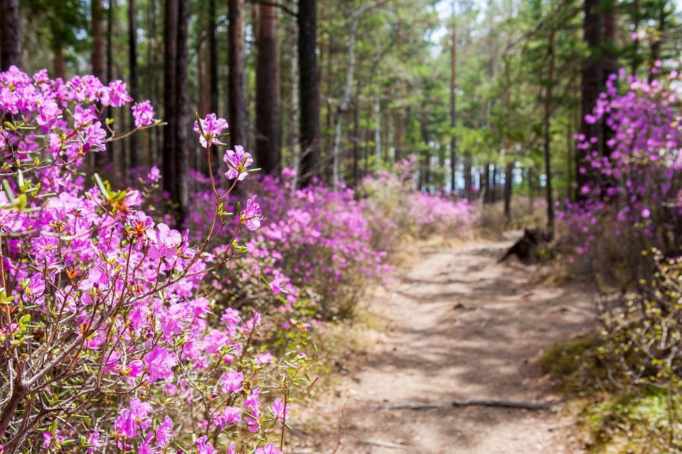 伊尔库茨克的春季。摄影:Ilya Ipatov